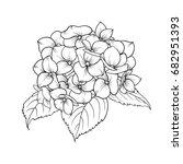 blooming flower hydrangea on... | Shutterstock .eps vector #682951393