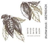 2 cocoa branches retro... | Shutterstock .eps vector #682983424