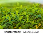green background | Shutterstock . vector #683018260