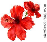 red hibiscus flower  tropical... | Shutterstock . vector #683049958