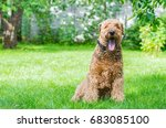airedale terrier is a strong...   Shutterstock . vector #683085100