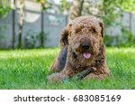 airedale terrier is a strong... | Shutterstock . vector #683085169