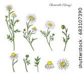 Chamomile Wild Field Flower...
