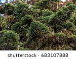 caucasus mountain fir tree... | Shutterstock . vector #683107888