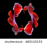 two betta fish tail color red... | Shutterstock . vector #683110153