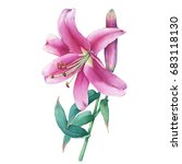 close up of a pink lily flower. ... | Shutterstock . vector #683118130