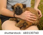 black mask puppy on human lap... | Shutterstock . vector #683130760