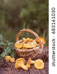 mushrooms chanterelle in the...   Shutterstock . vector #683161030