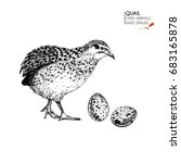 hand drawn set of farm animals.... | Shutterstock . vector #683165878