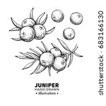 juniper vector drawing.... | Shutterstock .eps vector #683166130