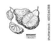 bergamot vector drawing.... | Shutterstock .eps vector #683166388