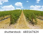 australian wineries rows of... | Shutterstock . vector #683167624