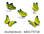 Stock photo fifth yellow butterfly isolated on white background 683175718