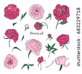 beautiful peonies set. hand... | Shutterstock .eps vector #683229718