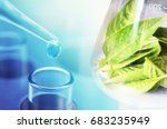 research green herb leaf | Shutterstock . vector #683235949