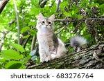 Stock photo siberian kitten 683276764