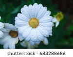 Fresh Flowers Drops Of Water O...