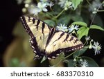 close up view of a beautiful... | Shutterstock . vector #683370310