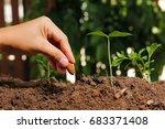 hands of farmer growing and... | Shutterstock . vector #683371408