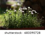 nature background with... | Shutterstock . vector #683390728