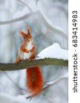Cute Orange Red Squirrel...