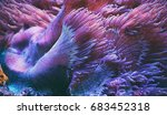 anemone close up | Shutterstock . vector #683452318