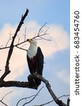 african fish eagle or to... | Shutterstock . vector #683454760