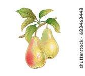 pears. realistic vector... | Shutterstock .eps vector #683463448