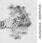 leopard. black and white sketch ...   Shutterstock . vector #683491534