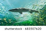 Shark Swimming Overhead At...