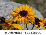 zinnia flower | Shutterstock . vector #683515900