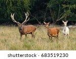 deer forest  deer rises | Shutterstock . vector #683519230