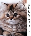 Stock photo cute kitten portraits 683523706