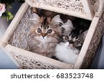 Stock photo cute kitten in the basket 683523748