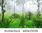cycad palm tree in the forest... | Shutterstock . vector #683625058