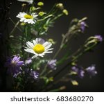 bouquet of daisies and... | Shutterstock . vector #683680270