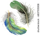watercolor bird feather from... | Shutterstock . vector #683705008