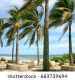 coconut trees wind the beach. | Shutterstock . vector #683739694