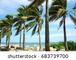 coconut trees wind the beach. | Shutterstock . vector #683739700