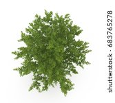 old green summer oak tree...   Shutterstock . vector #683765278