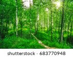deep spring forest with a sunny ... | Shutterstock . vector #683770948