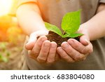 young green sprout with soil in ... | Shutterstock . vector #683804080