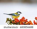 Cute Bird. Bird On Branch....
