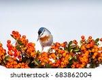 Cute Bird Nuthatch. Bird On...