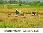 farmers working in rice field ... | Shutterstock . vector #683872168