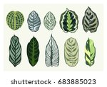 set of trendy summer exotic...   Shutterstock .eps vector #683885023