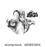 Sheep Buffalo Camel Poster...