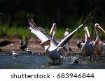 pelican | Shutterstock . vector #683946844