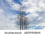 dead trees perennial with... | Shutterstock . vector #683994844