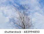 dead trees perennial with...   Shutterstock . vector #683994850